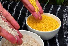 برنج طلایی تراریخته