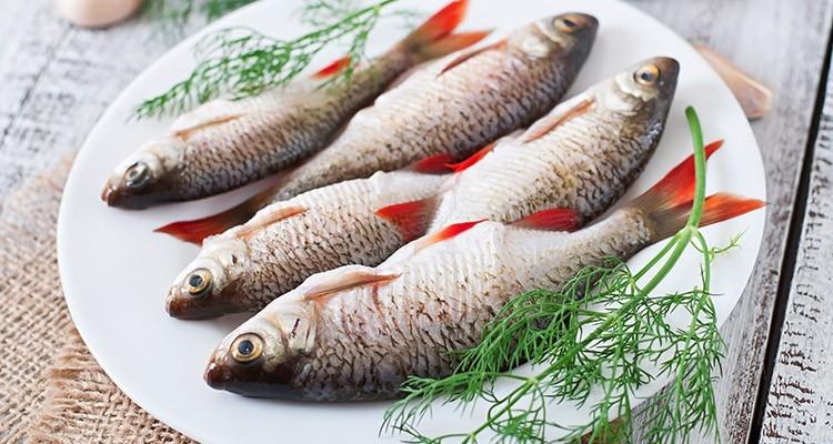 ماهی های پرورشی