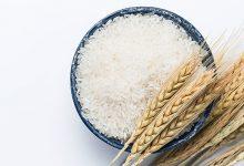 برنج وارداتی تراریخته