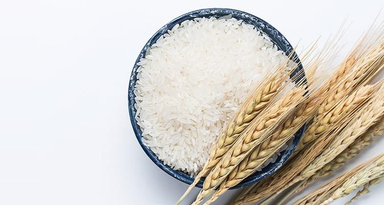 برنج های وارداتی تراریخته