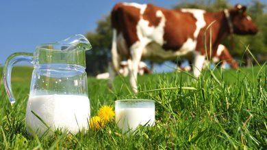 شیر پاستوریزه یا ارگانیک