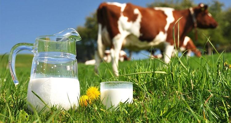 شیر ارگانیک یا پاستوریزه