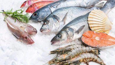 مزاج انواع ماهی در طب سنتی