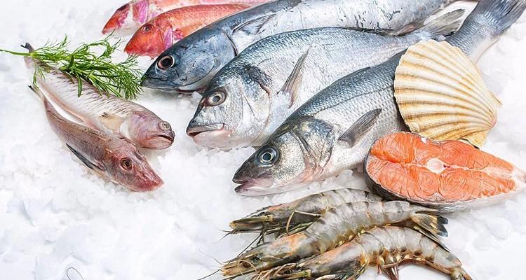 همه چیز در مورد طبع و مزاج انواع ماهی