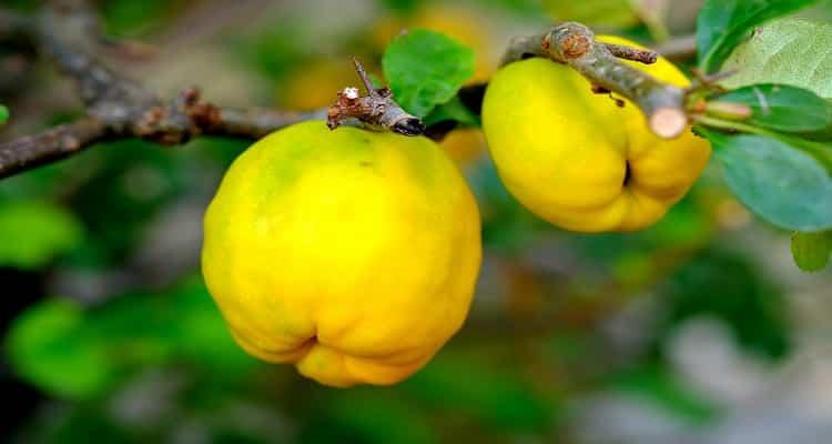 با خواص میوه به آشنا شوید!
