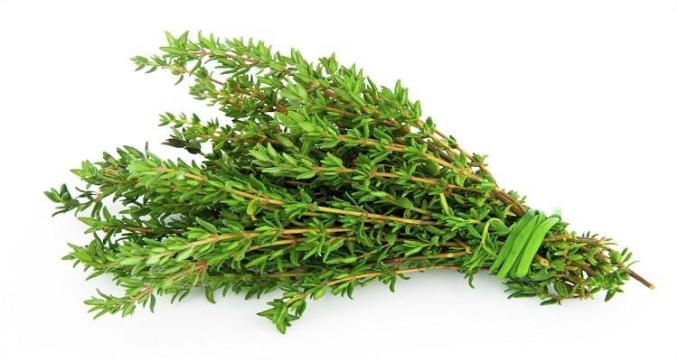 با خواص گیاه دارویی آویشن آشنا شویید