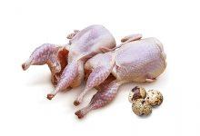 خواص و مزاج گوشت بلدرچین در طب سنتی