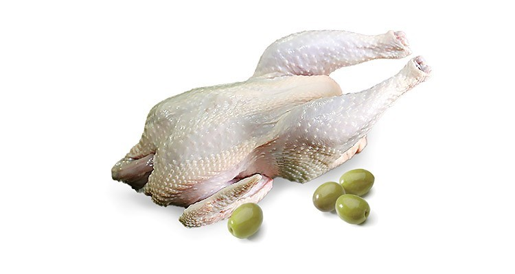 خواص و مزاج گوشت خروس در طب سنتی