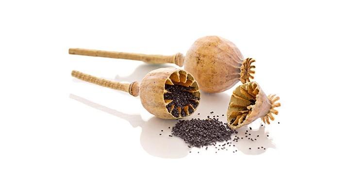 خواص و مزاج خشخاش در طب سنتی