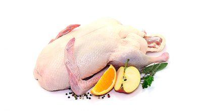 خواص و مزاج گوشت غاز در طب سنتی