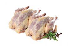 خواص و مزاج گوشت قرقاول در طب سنتی