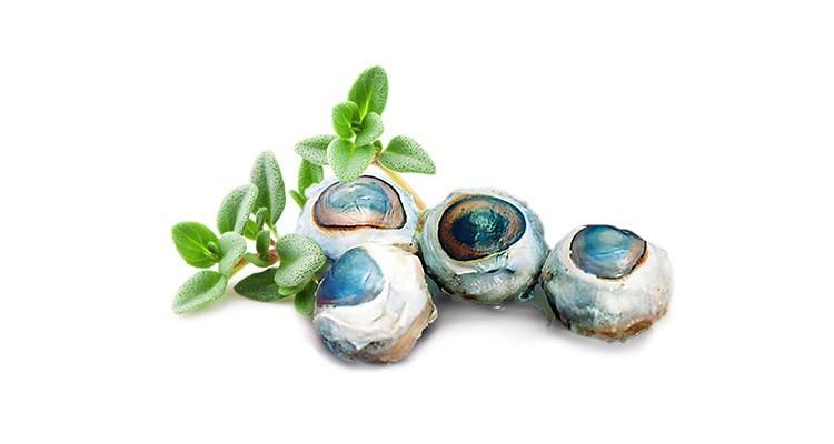 خواص و مزاج چشم در طب سنتی