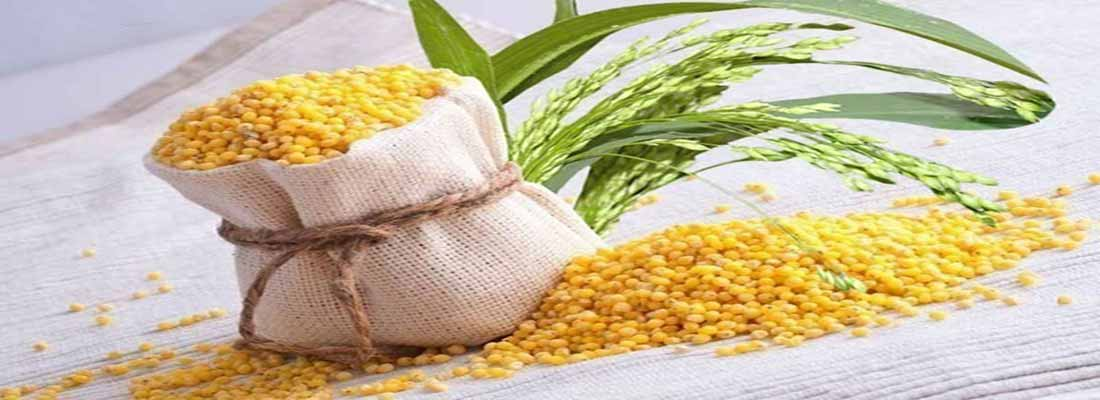 خواص و مزاج ارزن در طب سنتی