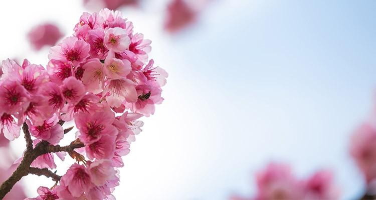 فصل بهار ، بایدها و نبایدها