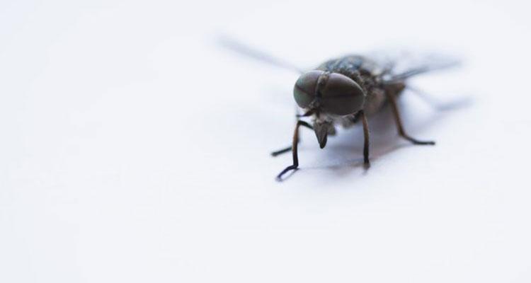 خلاص شدن از شر حشرات در تابستان