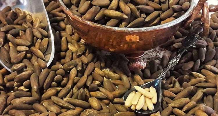 خواص و فواید درمانی دانه چلغوز در طب سنتی