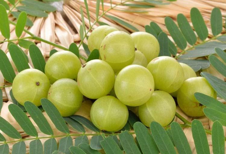 آمله؛ گیاه تقویت کننده کل اعضای بدن
