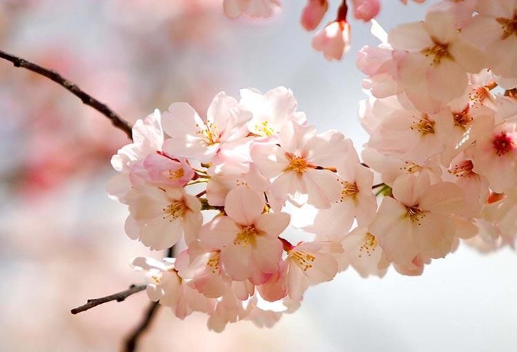 تدابیر پاکسازی بدن در آستانه بهار