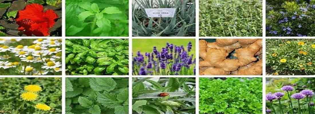 انواع گیاهان دارویی به همراه عوارض و موارد منع مصرف
