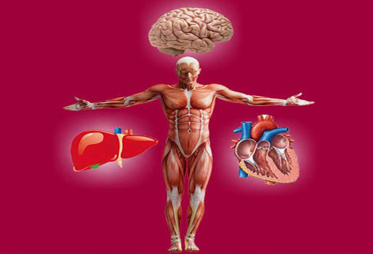تقویت همزمان اعضاء رئیسه بدن (قلب و مغز و کبد)