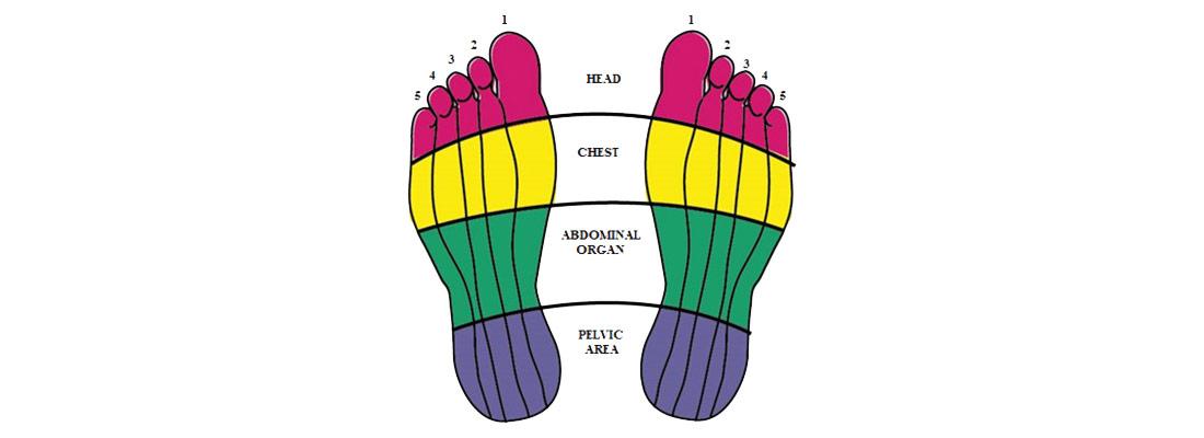 چهار قسمت اساسی در رفلکسولوژی کف پا