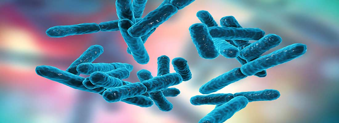 پروبیوتیک چیست و چه نقشی در بدن دارد؟